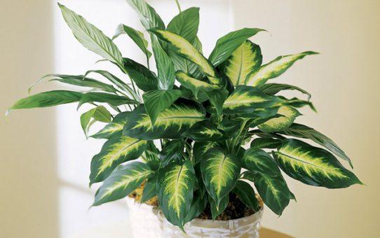 Список особо опасных растений и цветов для попугаев