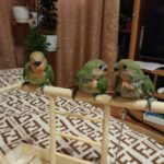 Стенд для попугая. Зачем он нужен?