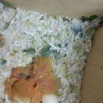 Искусственное выкармливание птенцов