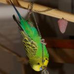 Игры для попугаев