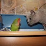 Кошка и попугай вместе