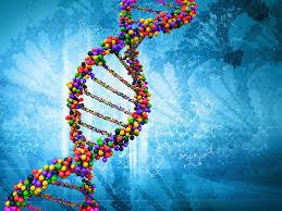 ДНК попугаев