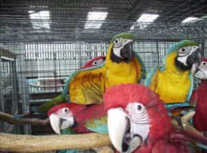 здоровье попугаев