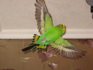попугай летает