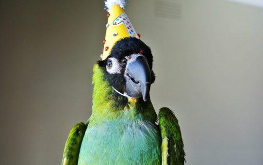 Что подарить попугаю
