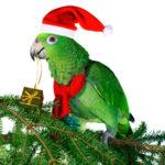 Попугай подарок на новый год и на день рождения