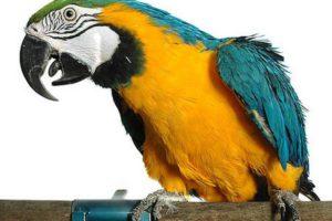 Попугай говорит