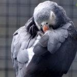 Сколько спят попугаи?