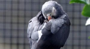 Сколько спят попугаи