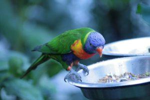 попугай без еды и воды