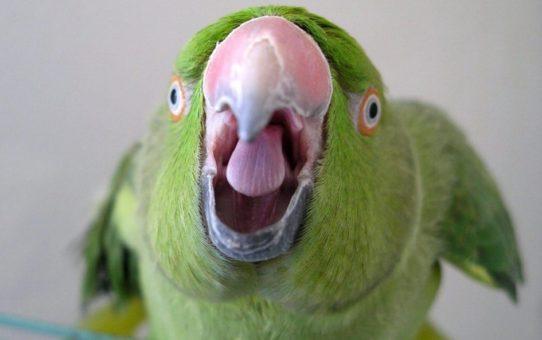 Попугай кусается. Что делать?