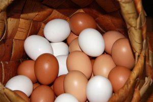 куриные яйца для попугаев