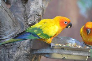 Что любят попугаи