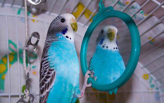 Как отдать попугая