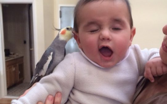 Рождение ребенка и попугай