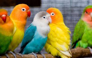 попугай надоел