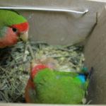 Основные вопросы про попугаев