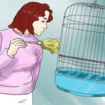 Уборка клетки попугая