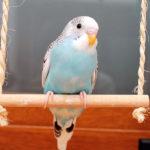 Качели для попугаев