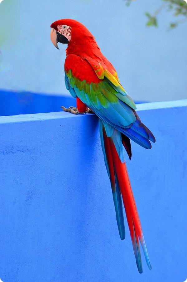 Нарисовать, картинка попугай