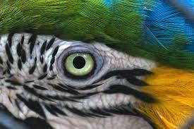 Как видит попугай