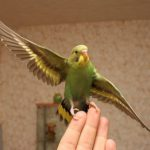 Что любят попугаи?