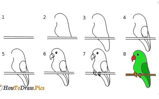 Рисуем волнистого попугая